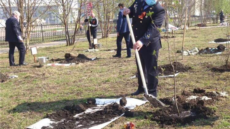 Яблоневая аллея, заложенная членами Совета, даст старт городскому этапу Международной акции «Сад памяти»
